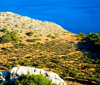 Rhodes olive groves
