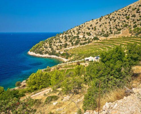 Vineyard and beach of Brač island