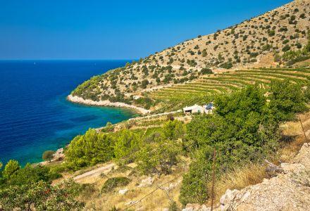 Vineyard and beach of Brač